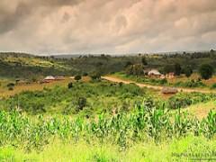 Schwarzer Schwanz in Afrika